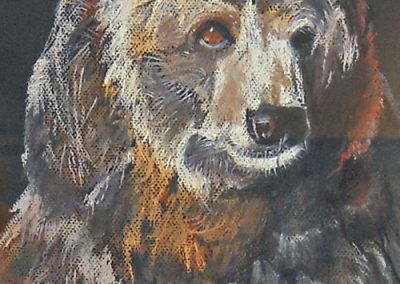 Grizzly Bear by Joann Feeney