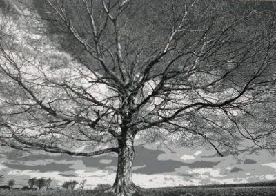 Shades of Gray by Charles McCann
