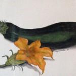 Zucchini by Virginia Gaudiello