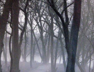 Fog in Trees by Mary Kosar